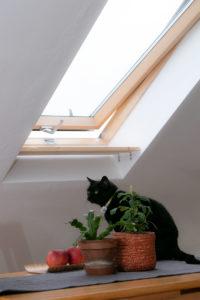 Tetőablak macska